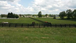 Lexington Horses4